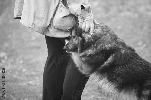 Fotografia  Tenderness between man and dog