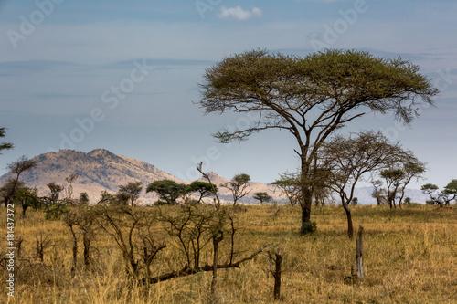 In de dag Baobab Die Wildnis von Tansania - Afrika