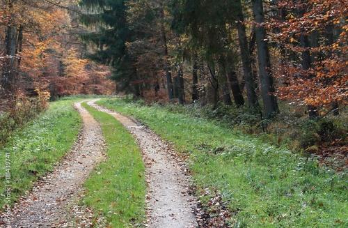 Fotografía  herrlicher Weg durch den Wald