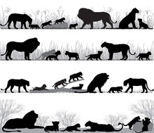 Silhouettes Of Lions And Lion ...