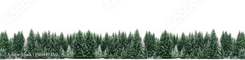 Montage in der Fensternische Khaki Panorama of spruce tree forest covered by fresh snow during Winter Christmas time. The winter scene is almost duotone due to contrast between the frosty spruce trees, white snow foreground and sky
