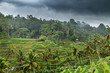 Green field rice terrace in Bali, Indonesia
