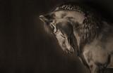 Czystej krwi czarny koń - 181475198