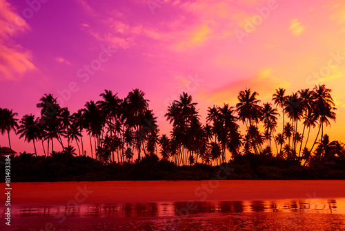 Spoed Foto op Canvas Roze Palm trees on the beach at vivid tropical beach sunset