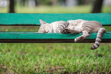 Cat Sleeping On Wooden Chair At Park With Nature