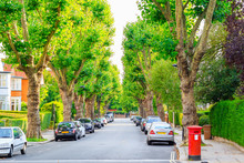 View Of Street Lined With Tree...