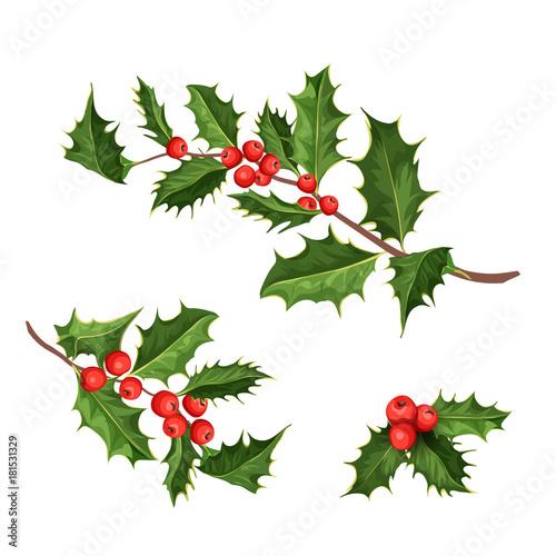 Fototapeta vector christmas holly mistletoe ilex leaves