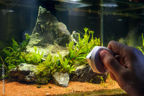 Photo Home aquarium cleaning using magnetic fish tank cleaner