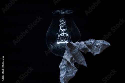 Ein fetter Nachtfalter sitzt im Dunkeln auf einer schwach leuchtenden Glühlampe