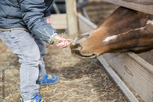 Poster Ezel Toddler Boy Visiting a Local Urban Farm and Feeding the Horses with Hay