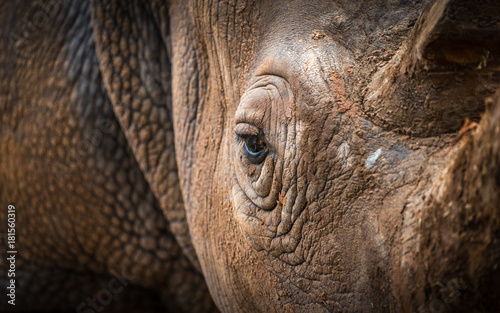 Photo sur Toile Rhino White Rhino Eye