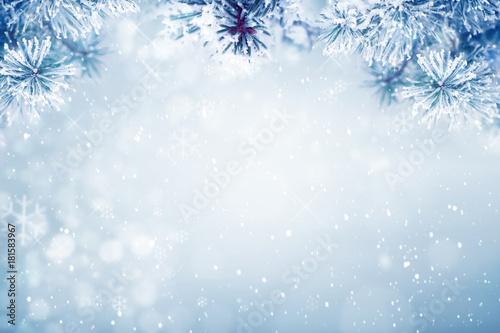 Zimy tło, spada śnieg na sosnowych gałąź kopii przestrzeni