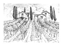 Rustic Vineyard. Rural Landscape With Houses. Solar Tuscany Background. Fields And Cypress Trees. Harvesting And Haystacks. Engraved Hand Drawn In Old Sketch And Vintage Style For Label.