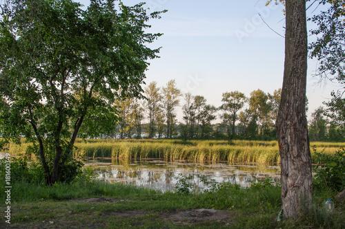 Fotografia Green trees on the river Bank