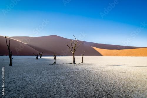 Fotografie, Obraz  Deadvlei, Sossusvlei, Namibia