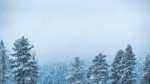 Photographie  Snowy trees in lapland