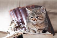 Scientist Cat Still Life