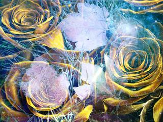 Obraz na Szkle Róże Yellow roses