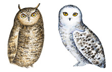 Set Of Two Different Owls, White Snowy Owl And Brown Great Horned. Hand Painted Watercolour Illustration, Isolated, White Background. Clip Art Images. Lovely, Friendly, Little Characters. Front View.