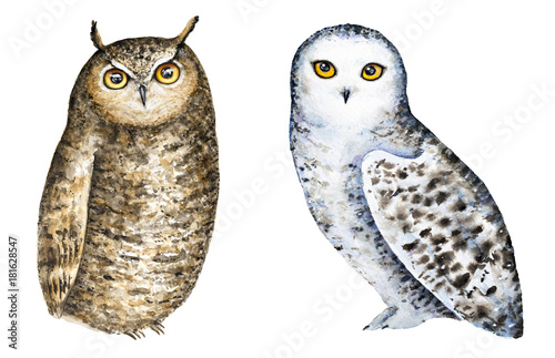 Deurstickers Uilen cartoon Set of two different owls, white snowy owl and brown great horned. Hand painted watercolour illustration, isolated, white background. Clip art images. Lovely, friendly, little characters. Front view.