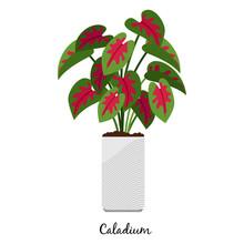 Caladium Plant In Pot Icon