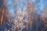 Plants in a winter field covered with frost - 181642387