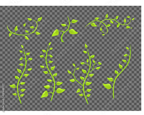 Fotografia ivy twigs with leaves on a transparent background vector