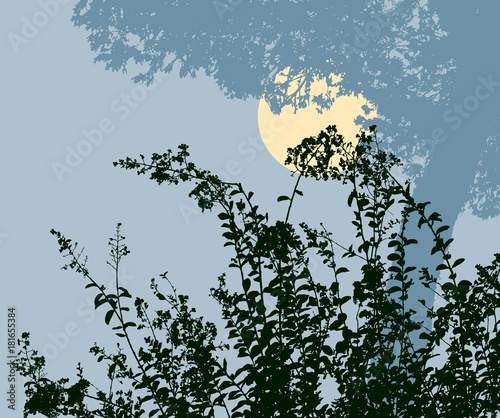 Photo Silhouettes of the plants in the moonlit night