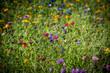 canvas print picture - Wildblumen Wiese