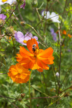 Close Look At Colorful Flowers With Bee