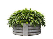 Isolated Planter With Clipping...