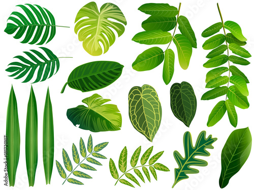 Fototapety, obrazy: Summer, spring leaves set. Green flat icon. vector, Isolated on white