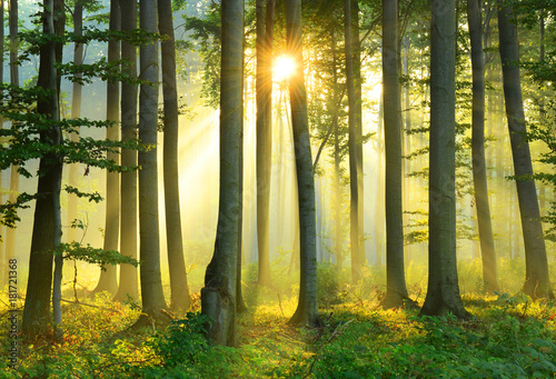 Photo  Morning in the forest