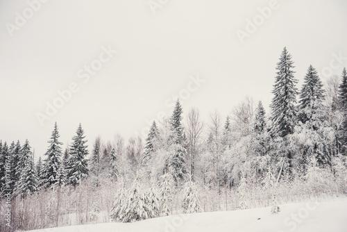 Fotobehang Lavendel nature landscape winter forest frosted