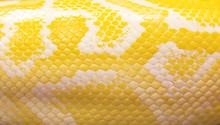 Python Snake Skin For Background