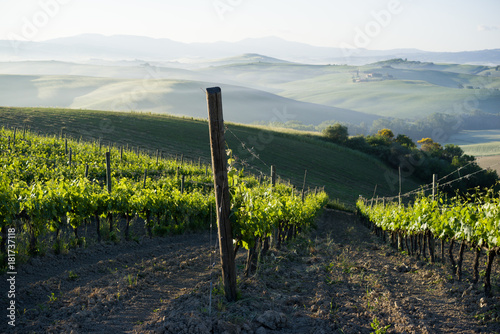 Papiers peints Vignoble Vineyard in a sunny afternoon in Italy