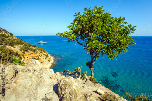 Foto op Aluminium Cyprus Tree against the sea, Akamas peninsula, Cyprus
