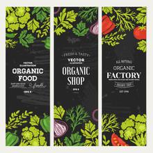 Sketchy Vegetables Banner Collection. Chalkboard Style Illustration. Vector Illustration