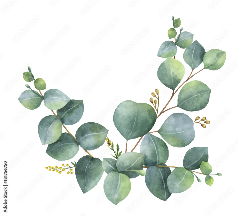 Fototapeta Watercolor vector wreath with green eucalyptus leaves and branches.