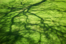 Green Lawn With Tree Shadow At Sunlight