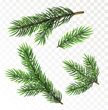 Fir Tree Branches Isolated On ...