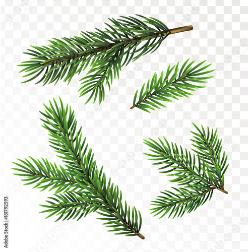 Canvas-taulu Fir tree branches isolated on white background