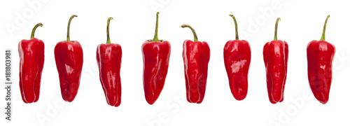 Photo sur Aluminium Hot chili Peppers Rote Peperoni