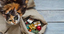 Cat Near The Sack With Christmas Gifts. Top View