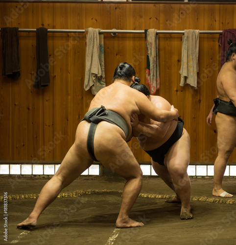 Fotografie, Obraz  Enormous sumo fighters wresling and training in sumo stables in tokyo