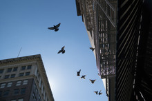 A Flock Of Pigeons Flying Over...