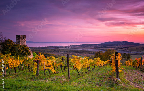 Tablou Canvas Colorful sunset over vineyards at lake Balaton, Hungary