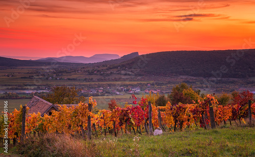 Spoed Foto op Canvas Koraal Colorful sunset over vineyards at lake Balaton, Hungary