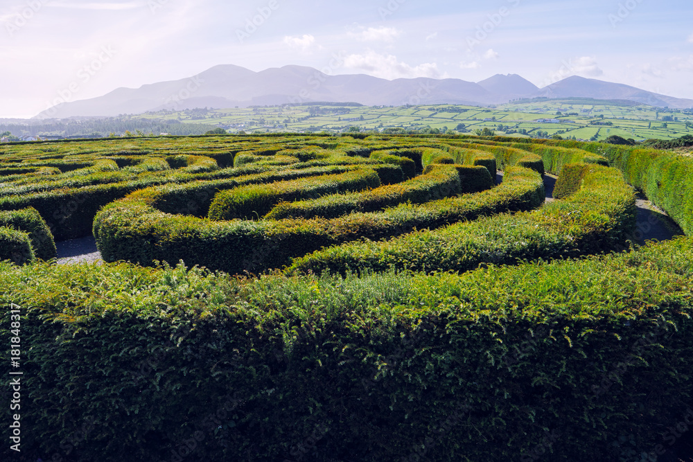 Fototapeta hedge maze against blue sky,Northern Ireland