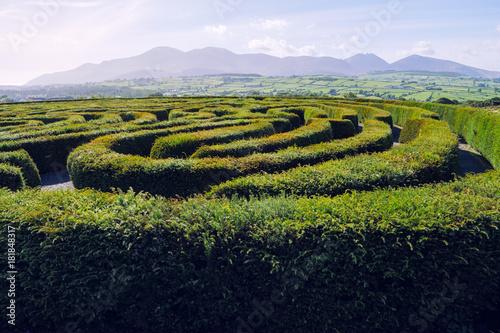 hedge maze against blue sky,Northern Ireland Canvas Print